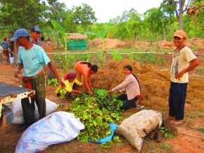 Growth & Transformation at the new Community Permaculture Education Farm in Battambang Province,Cambodia